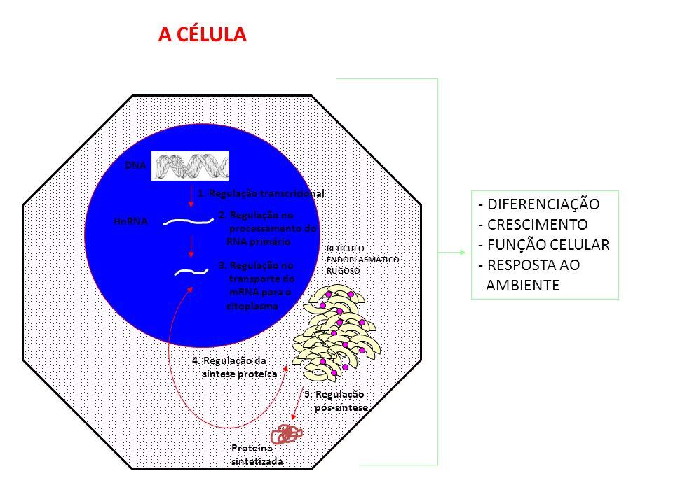 A CÉLULA - DIFERENCIAÇÃO - CRESCIMENTO - FUNÇÃO CELULAR - RESPOSTA AO