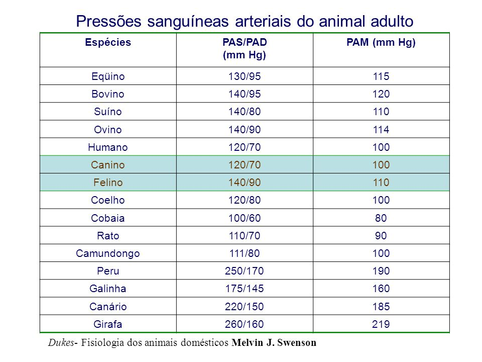 Pressões sanguíneas arteriais do animal adulto