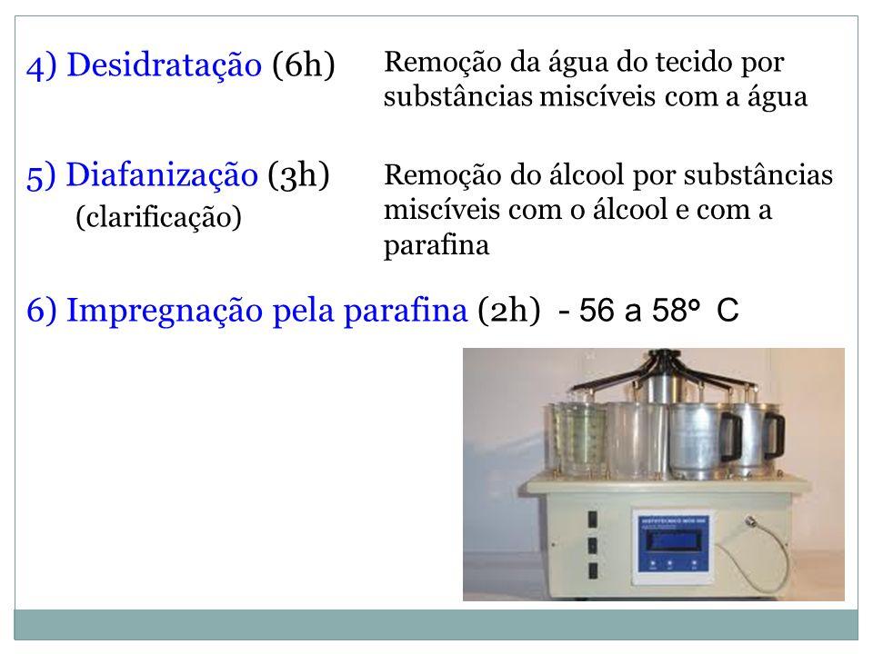 6) Impregnação pela parafina (2h) - 56 a 58o C