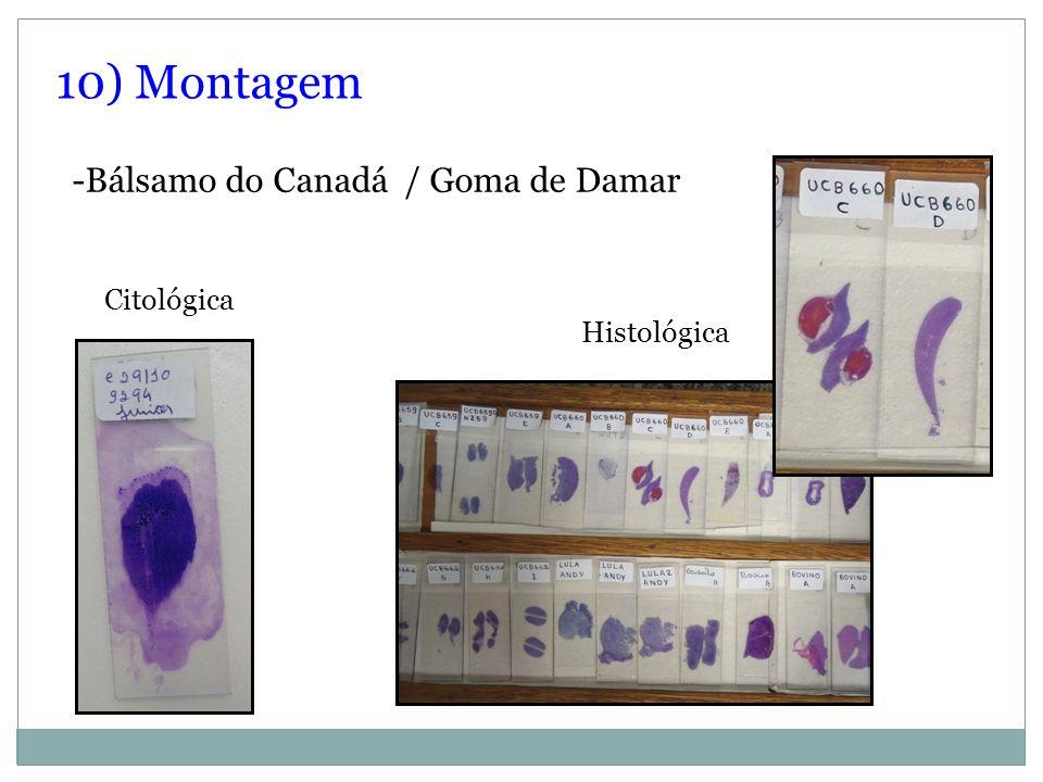 10) Montagem -Bálsamo do Canadá / Goma de Damar Citológica Histológica