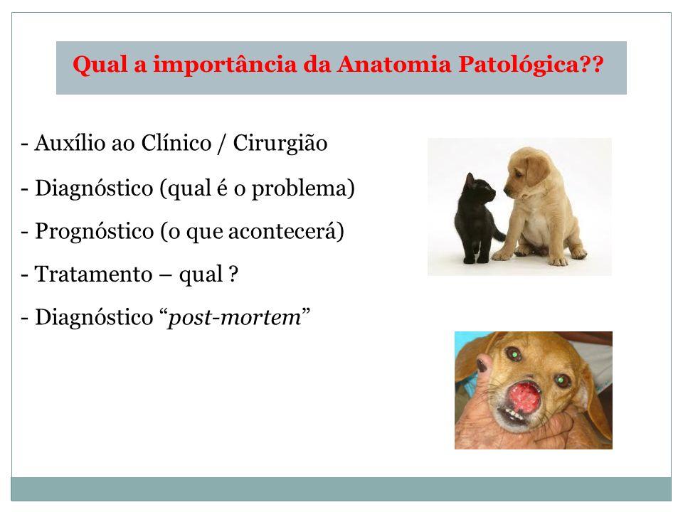 Qual a importância da Anatomia Patológica