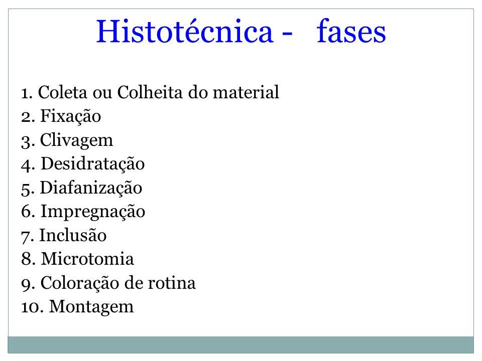 Histotécnica - fases 1. Coleta ou Colheita do material 2. Fixação