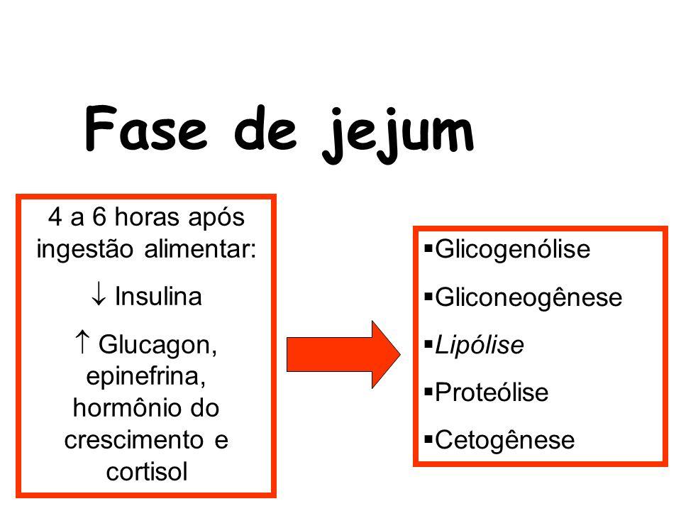Fase de jejum 4 a 6 horas após ingestão alimentar:  Insulina