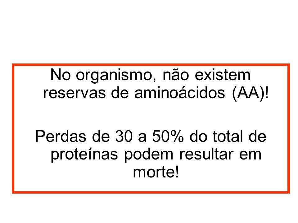 No organismo, não existem reservas de aminoácidos (AA)!