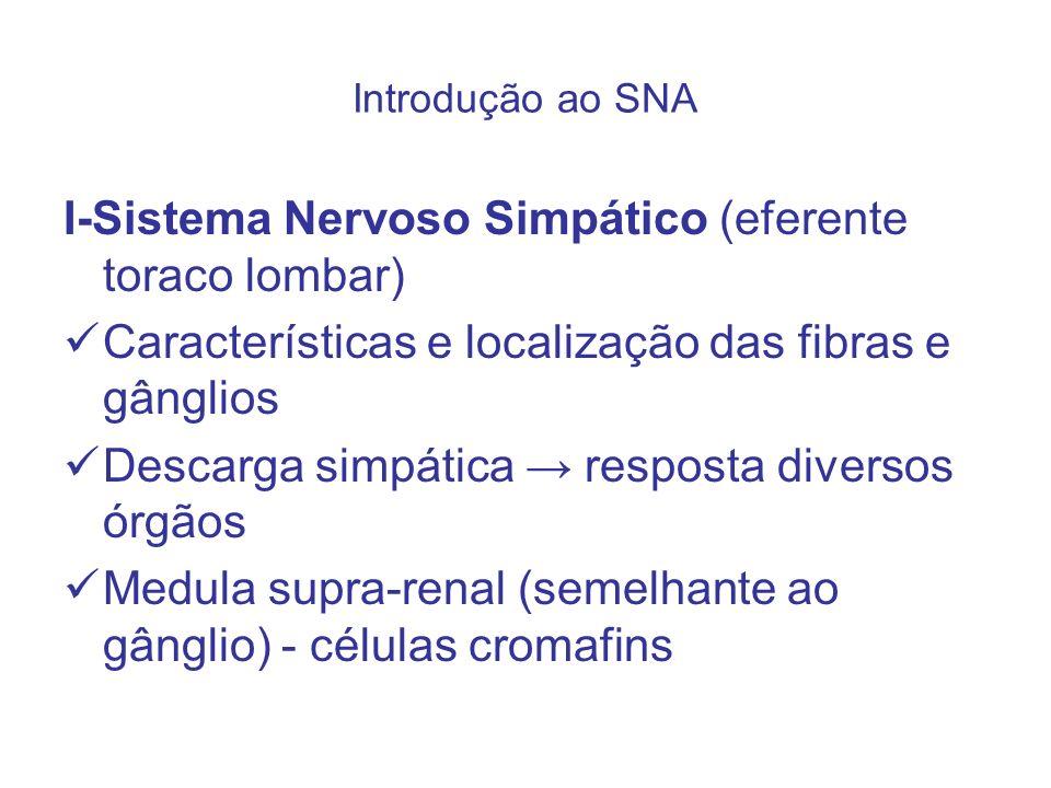 I-Sistema Nervoso Simpático (eferente toraco lombar)