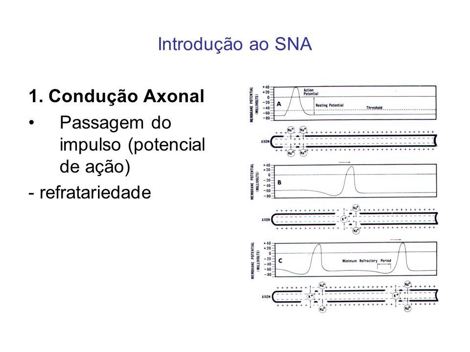 Introdução ao SNA 1. Condução Axonal Passagem do impulso (potencial de ação) - refratariedade