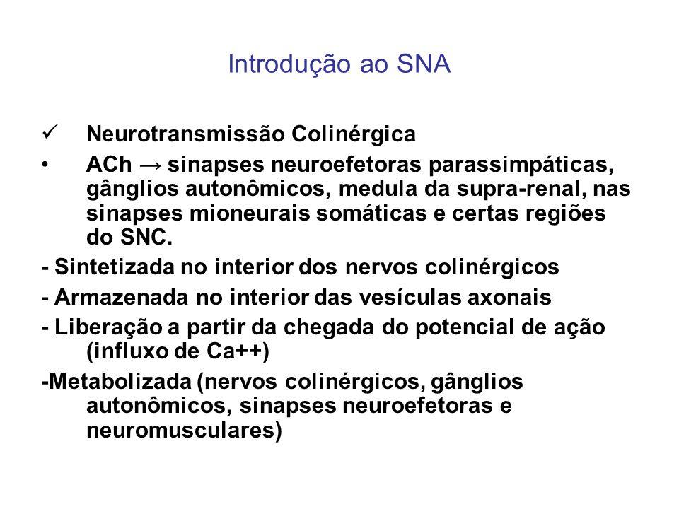 Introdução ao SNA Neurotransmissão Colinérgica