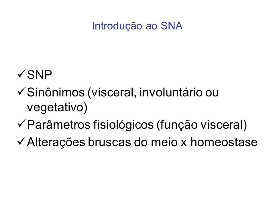 Sinônimos (visceral, involuntário ou vegetativo)