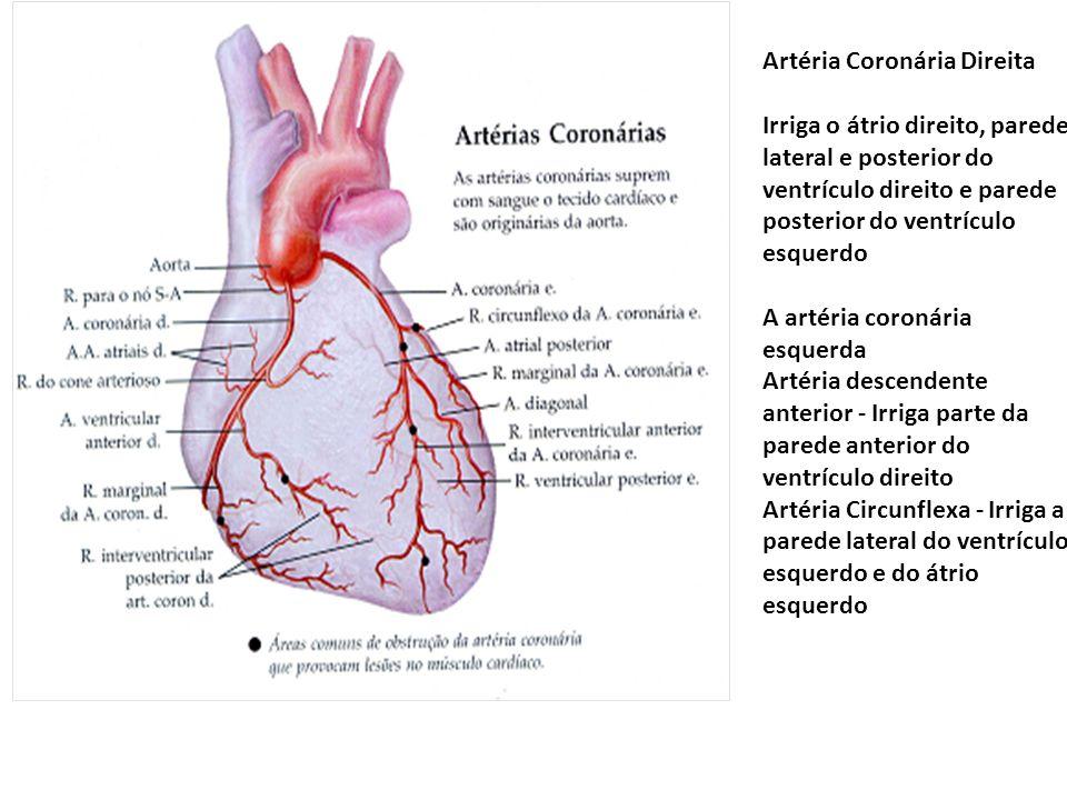 Artéria Coronária Direita