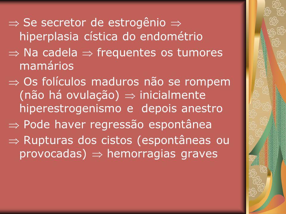  Se secretor de estrogênio  hiperplasia cística do endométrio
