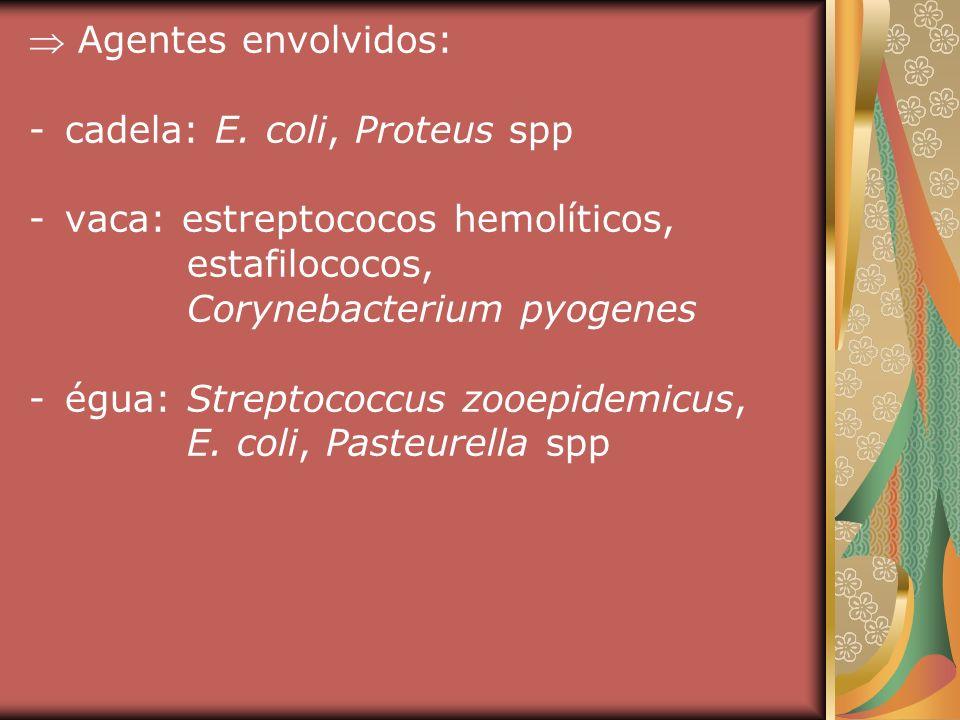 Agentes envolvidos: cadela: E. coli, Proteus spp. vaca: estreptococos hemolíticos, estafilococos,