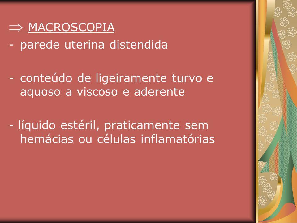  MACROSCOPIA parede uterina distendida