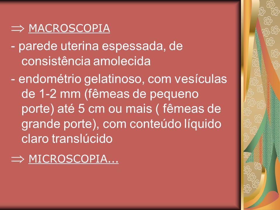  MACROSCOPIA  MICROSCOPIA...