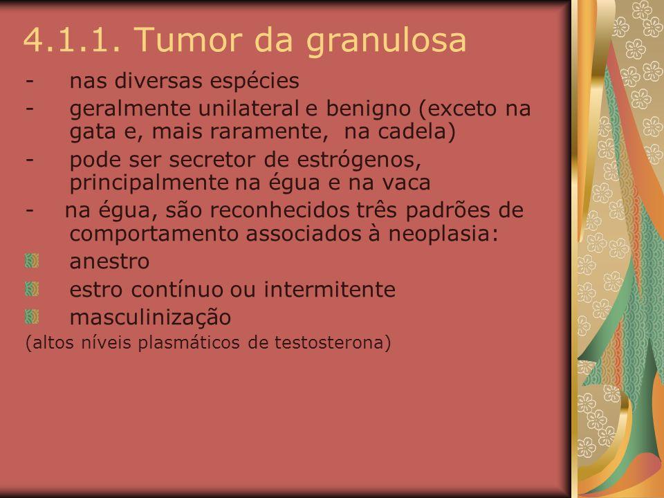4.1.1. Tumor da granulosa nas diversas espécies