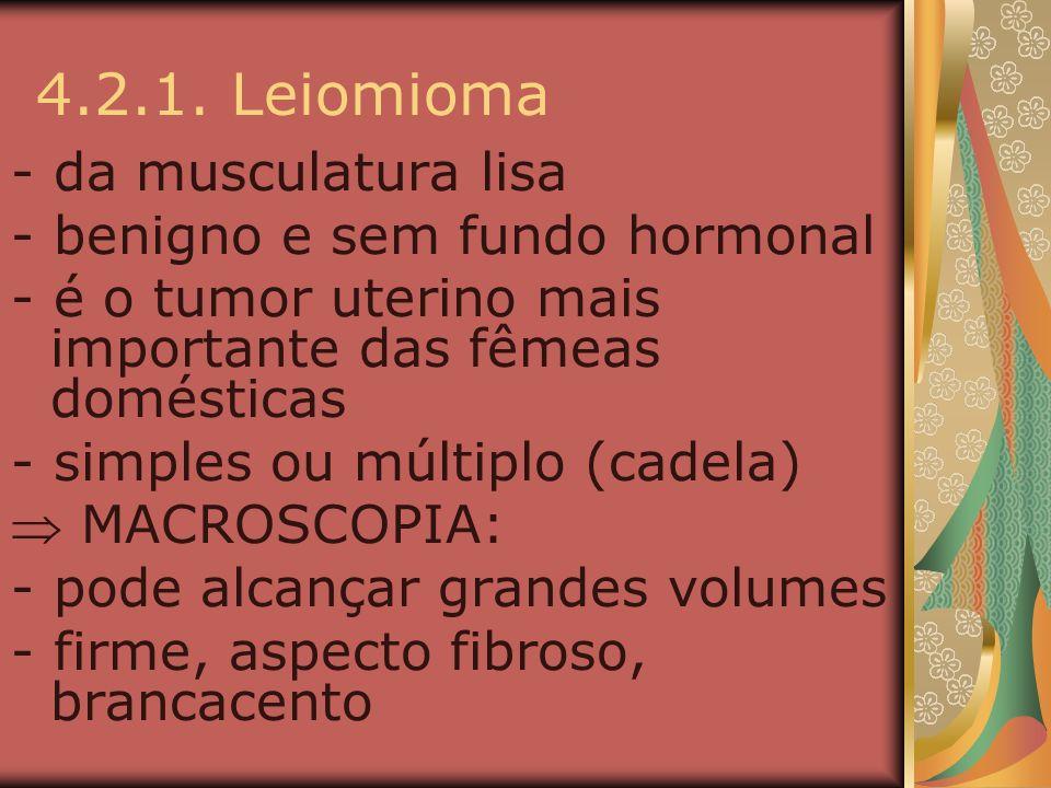 4.2.1. Leiomioma - da musculatura lisa - benigno e sem fundo hormonal