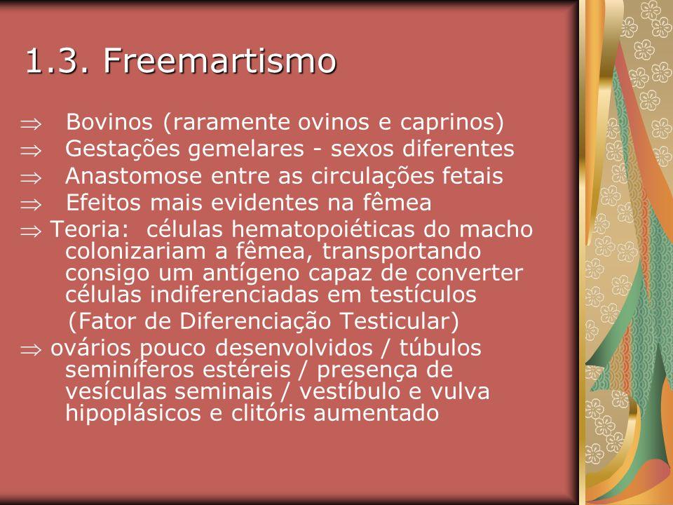 1.3. Freemartismo  Bovinos (raramente ovinos e caprinos)