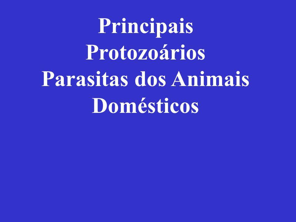 Principais Protozoários Parasitas dos Animais Domésticos
