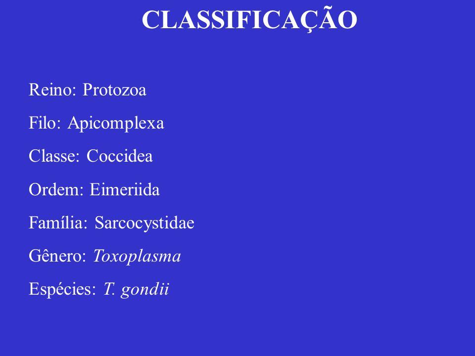 CLASSIFICAÇÃO Reino: Protozoa Filo: Apicomplexa Classe: Coccidea