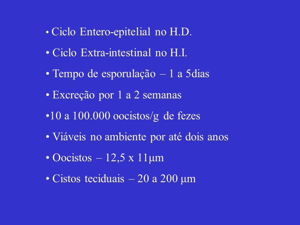 Ciclo Extra-intestinal no H.I. Tempo de esporulação – 1 a 5dias