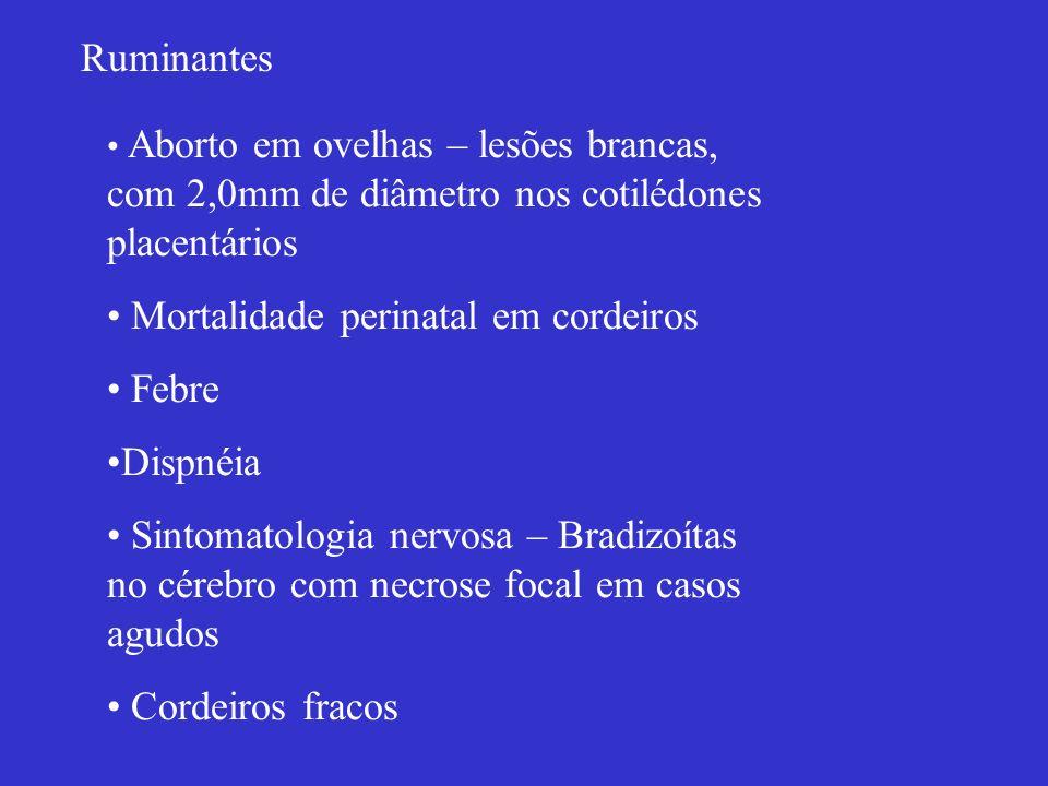 Mortalidade perinatal em cordeiros Febre Dispnéia