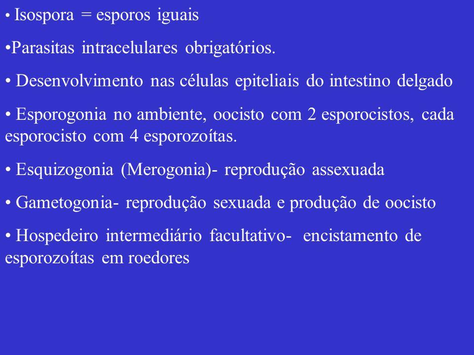 Parasitas intracelulares obrigatórios.