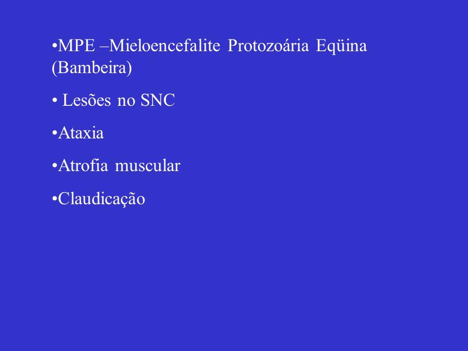MPE –Mieloencefalite Protozoária Eqüina (Bambeira)