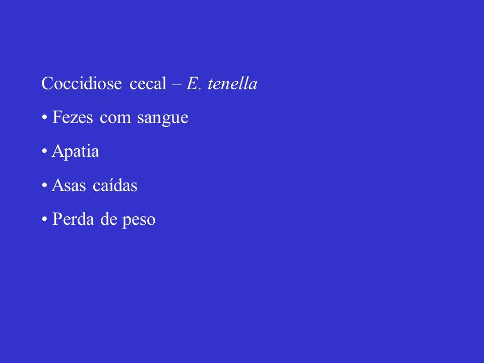 Coccidiose cecal – E. tenella