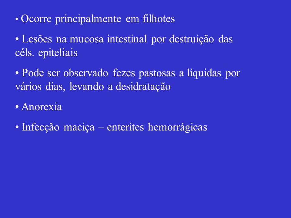 Lesões na mucosa intestinal por destruição das céls. epiteliais