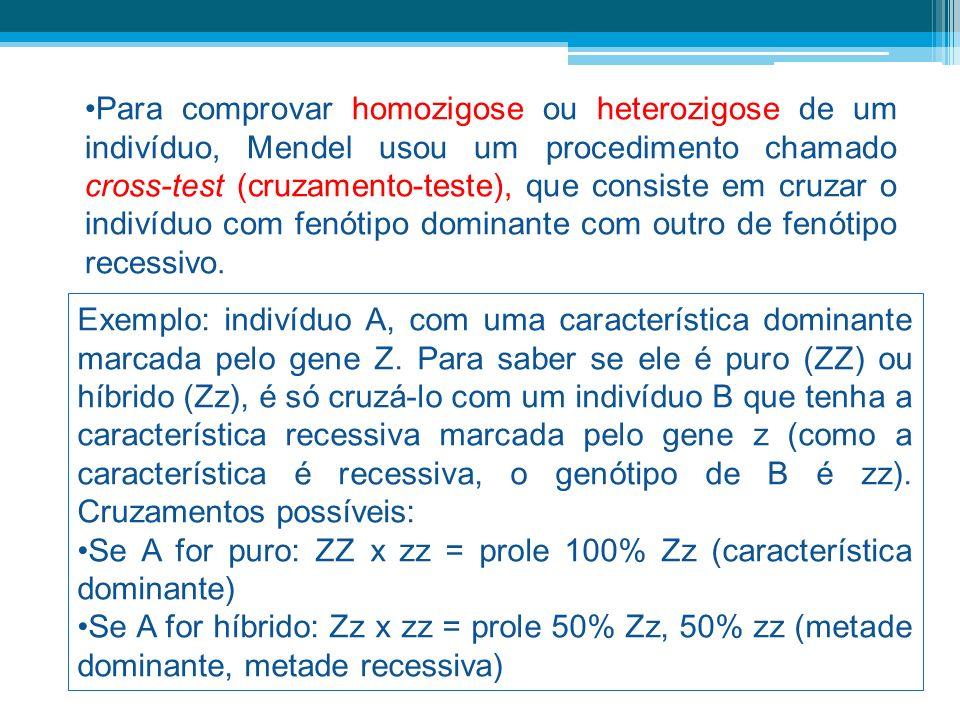 Para comprovar homozigose ou heterozigose de um indivíduo, Mendel usou um procedimento chamado cross-test (cruzamento-teste), que consiste em cruzar o indivíduo com fenótipo dominante com outro de fenótipo recessivo.