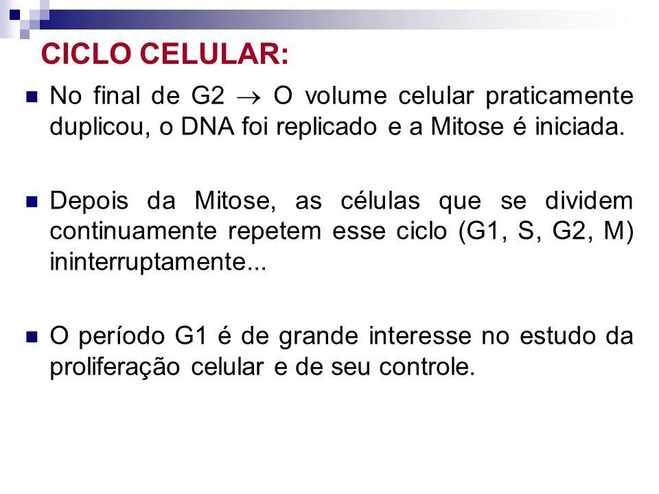 CICLO CELULAR: No final de G2  O volume celular praticamente duplicou, o DNA foi replicado e a Mitose é iniciada.