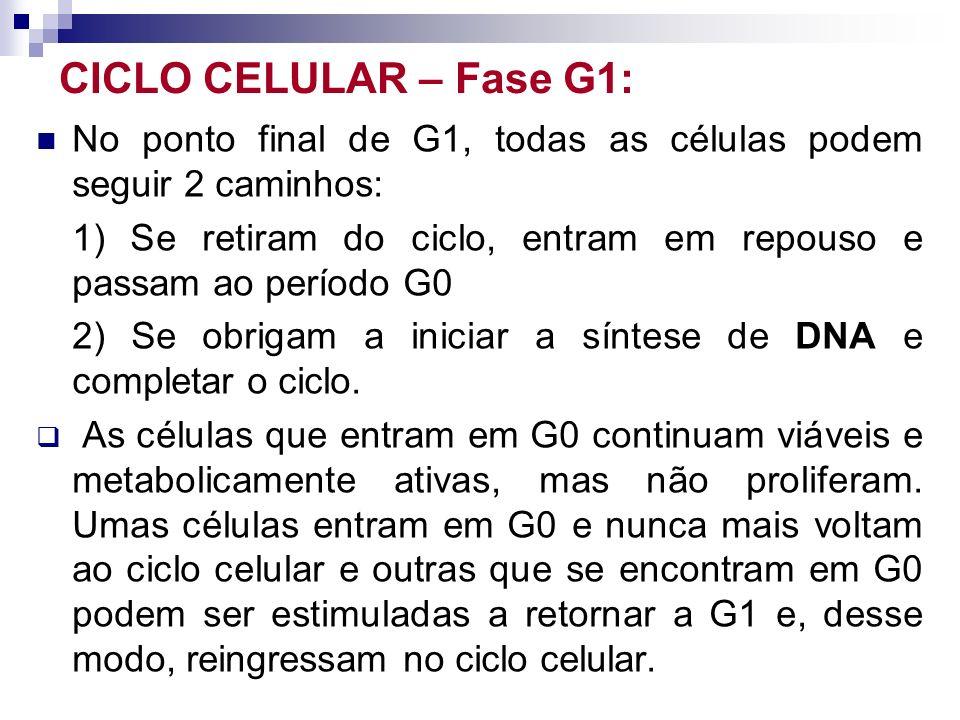 CICLO CELULAR – Fase G1: No ponto final de G1, todas as células podem seguir 2 caminhos: