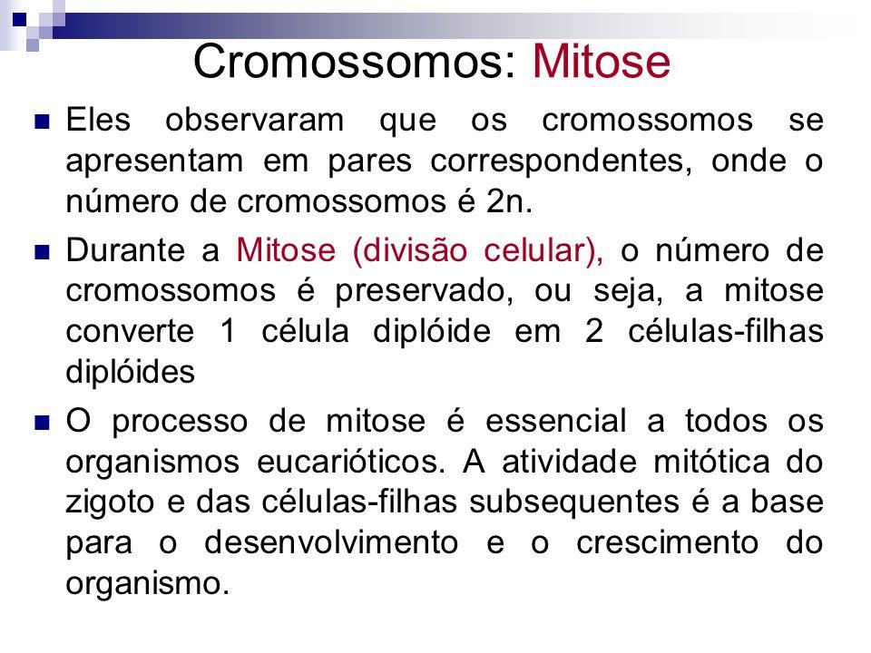 Cromossomos: Mitose Eles observaram que os cromossomos se apresentam em pares correspondentes, onde o número de cromossomos é 2n.
