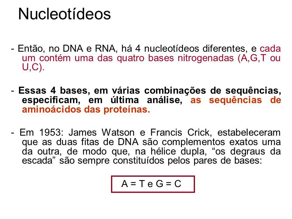 Nucleotídeos- Então, no DNA e RNA, há 4 nucleotídeos diferentes, e cada um contém uma das quatro bases nitrogenadas (A,G,T ou U,C).