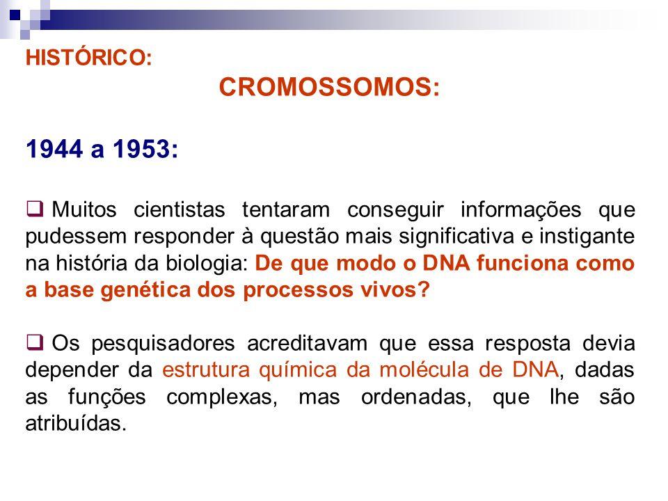 CROMOSSOMOS: 1944 a 1953: HISTÓRICO: