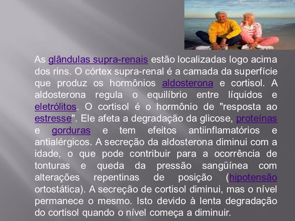 As glândulas supra-renais estão localizadas logo acima dos rins
