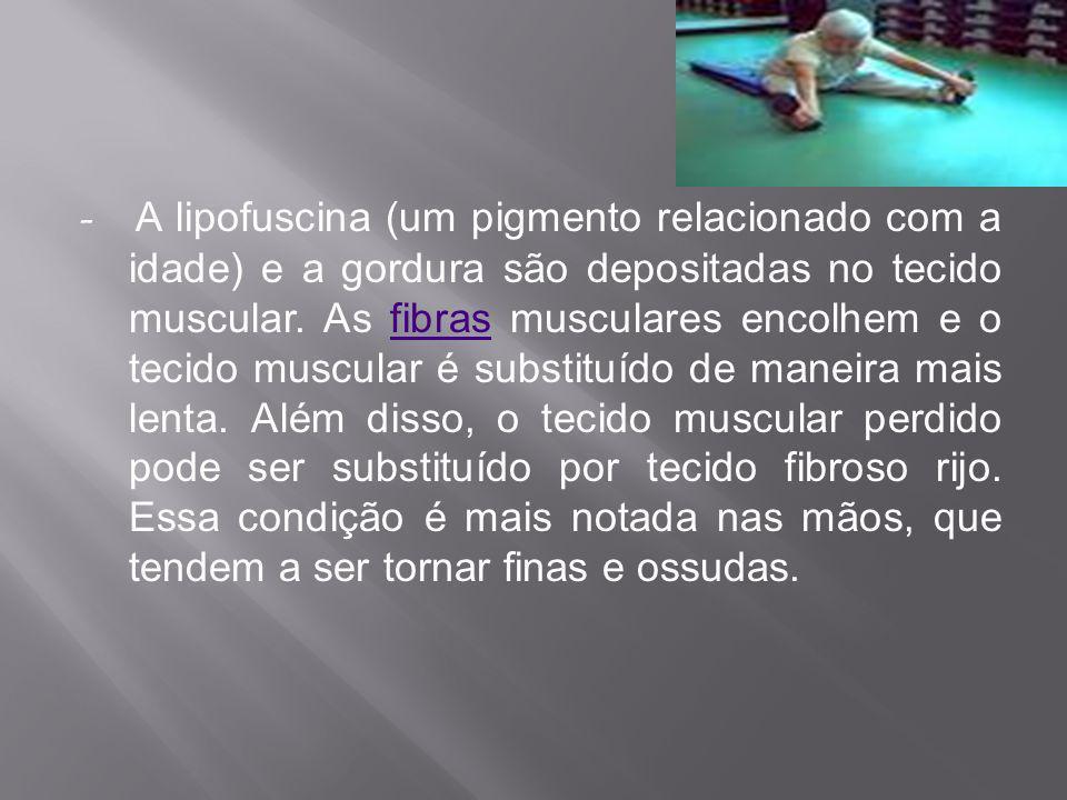- A lipofuscina (um pigmento relacionado com a idade) e a gordura são depositadas no tecido muscular.