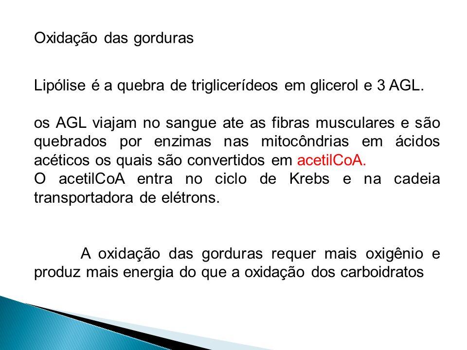 Oxidação das gorduras Lipólise é a quebra de triglicerídeos em glicerol e 3 AGL.