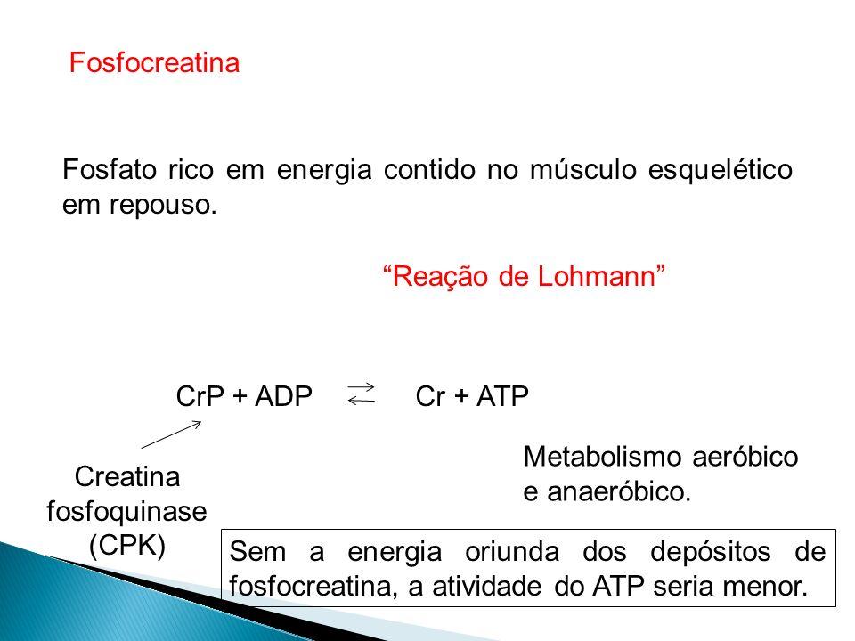 Creatina fosfoquinase (CPK)