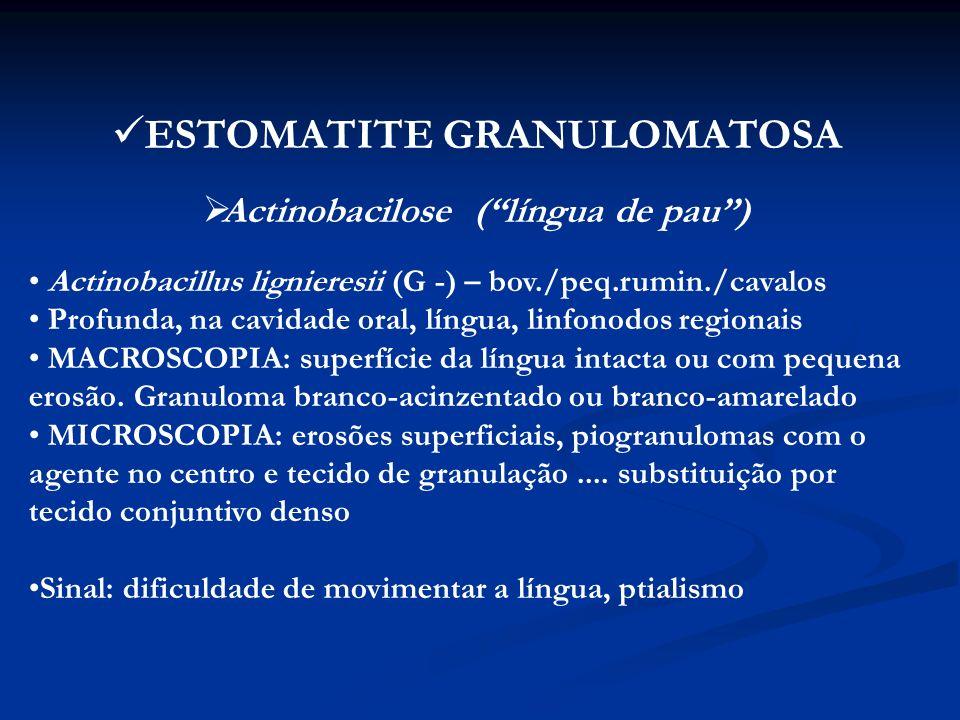 ESTOMATITE GRANULOMATOSA Actinobacilose ( língua de pau )