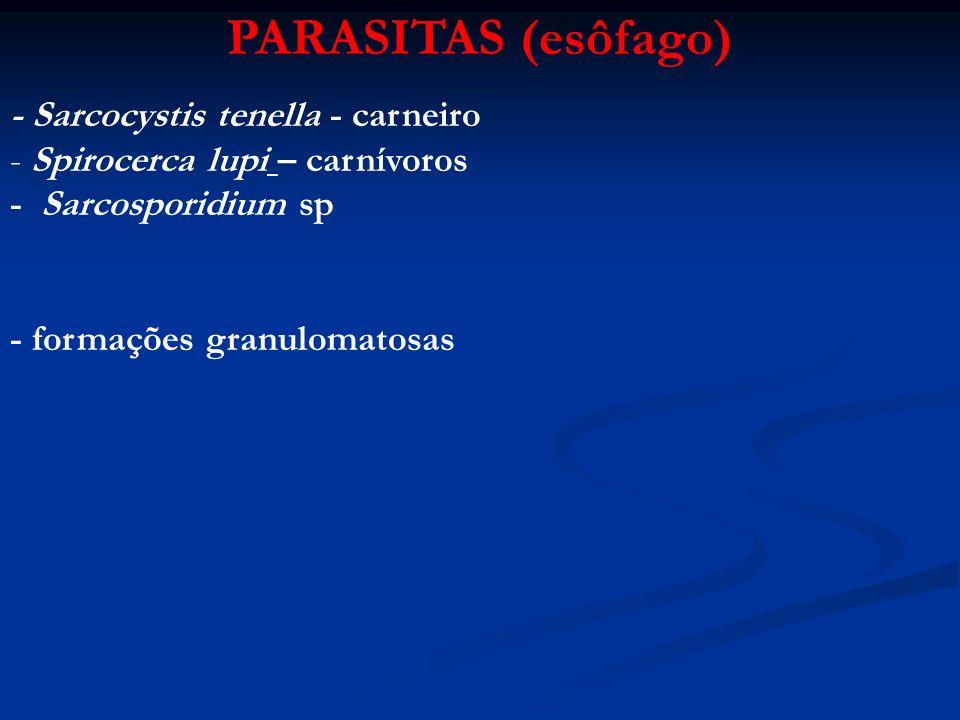 PARASITAS (esôfago) - Sarcocystis tenella - carneiro