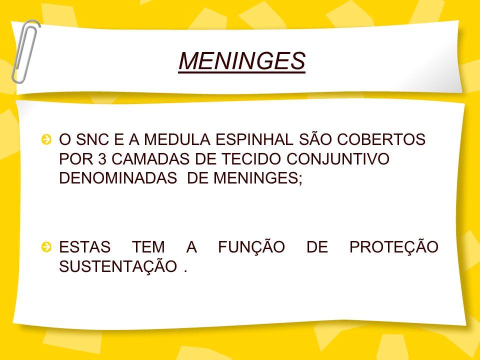 MENINGES O SNC E A MEDULA ESPINHAL SÃO COBERTOS POR 3 CAMADAS DE TECIDO CONJUNTIVO DENOMINADAS DE MENINGES;
