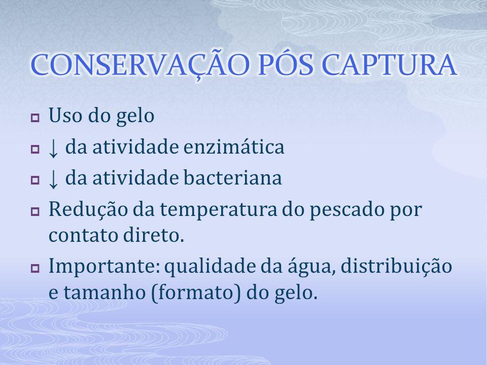 CONSERVAÇÃO PÓS CAPTURA