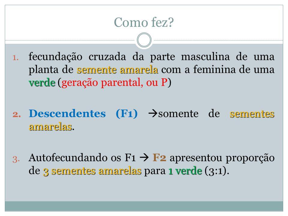 Como fez fecundação cruzada da parte masculina de uma planta de semente amarela com a feminina de uma verde (geração parental, ou P)