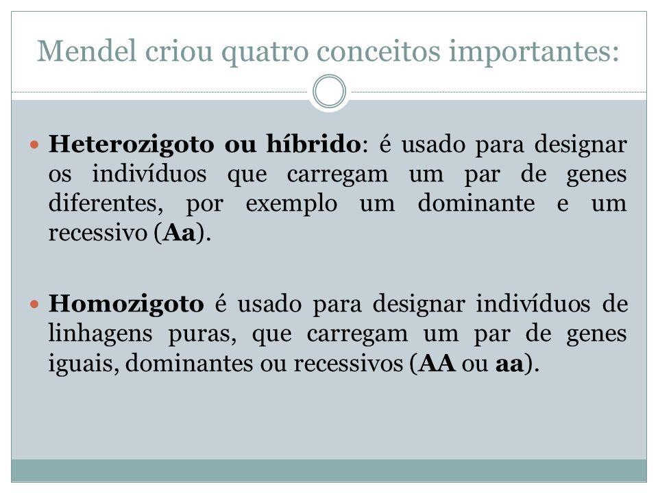 Mendel criou quatro conceitos importantes: