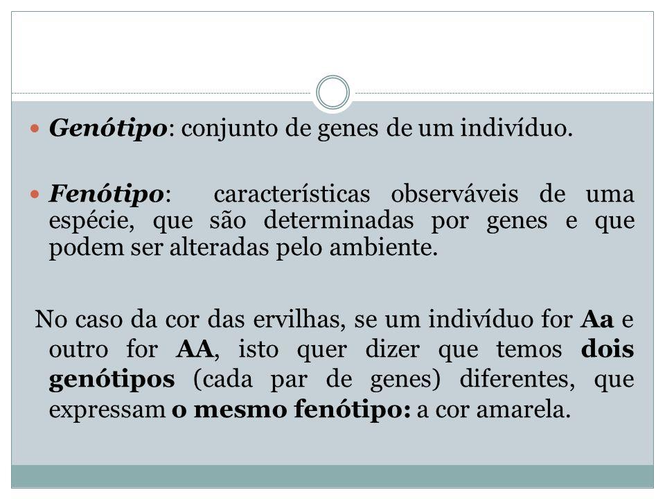 Genótipo: conjunto de genes de um indivíduo.