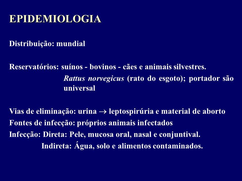 EPIDEMIOLOGIA Distribuição: mundial