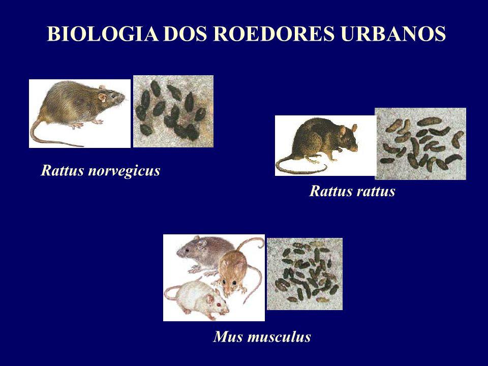 BIOLOGIA DOS ROEDORES URBANOS