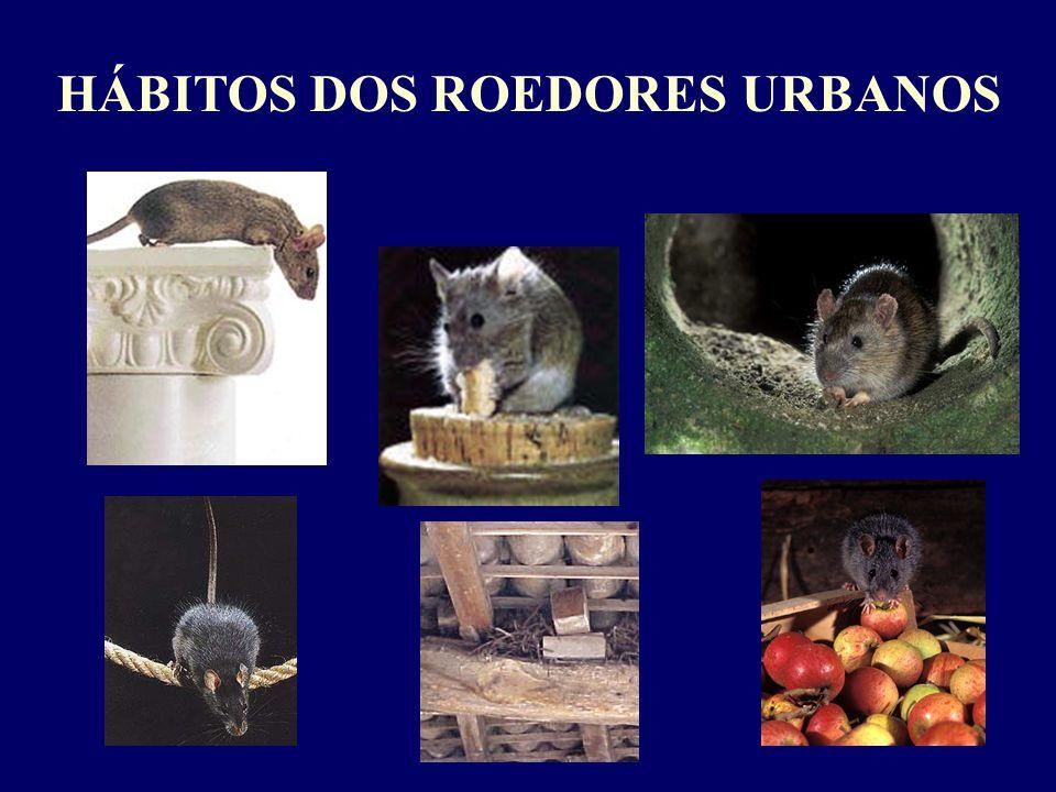 HÁBITOS DOS ROEDORES URBANOS