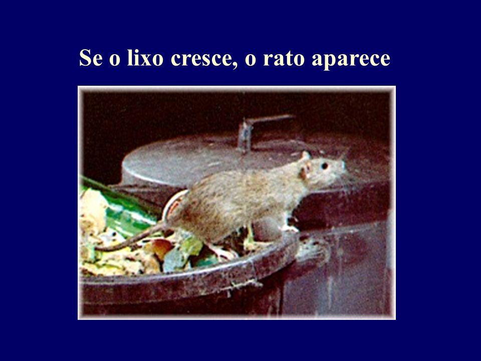 Se o lixo cresce, o rato aparece