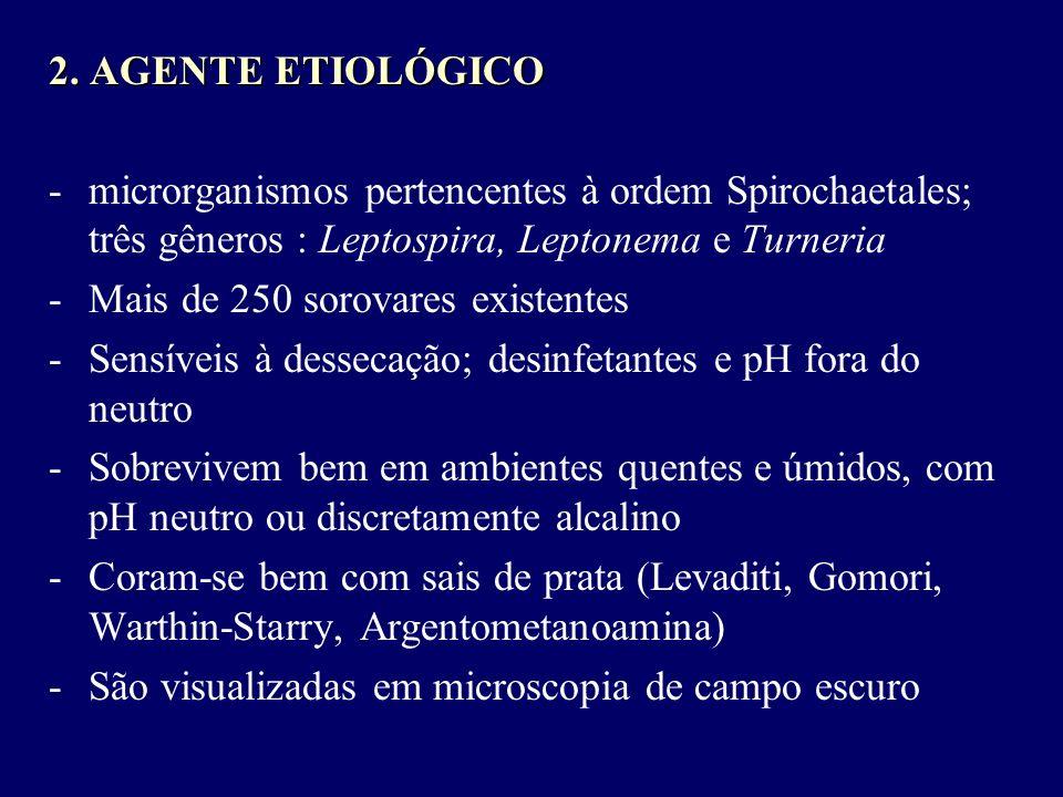 2. AGENTE ETIOLÓGICO microrganismos pertencentes à ordem Spirochaetales; três gêneros : Leptospira, Leptonema e Turneria.